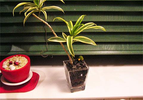 画像:観葉植物1