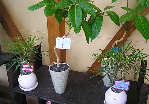 画像:観葉植物3