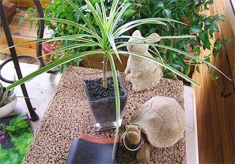 画像:観葉植物4